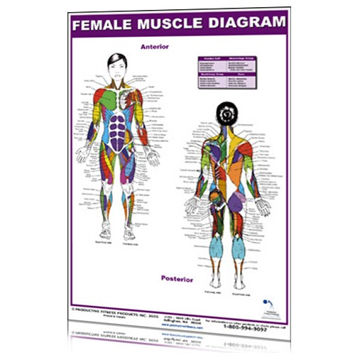 Female Muscle Diagram (Poster)